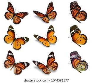 Schöne Schmetterlingssammlung einzeln auf weißem Hintergrund