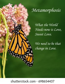 Beautiful Monarch Butterfly on Milkweed Flower with words about changing, transforming our world through love.