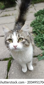 A beautiful mongrel cat in the garden