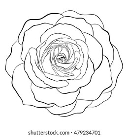 Black and white rose images stock photos vectors shutterstock beautiful monochrome black and white rose isolated on white background hand drawn contour line mightylinksfo
