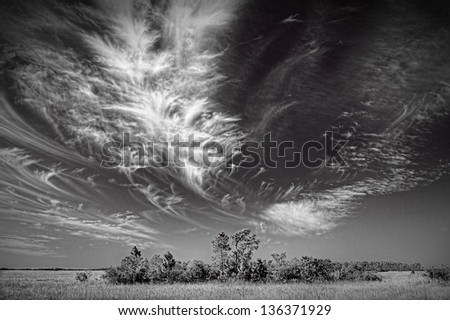 Beautiful monochrome image of a cirrus cloud formation over the Florida Everglades. the black and white interpretation brings out the structure of the cloud formation.