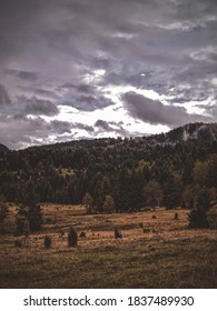 Beautiful moody day on the mountain. Moody day on Tara mountain, Serbia. - Shutterstock ID 1837489930