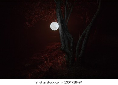Beautiful Moon lamp in the garden in misty night. Retro style lantern at night outdoor. Selective focus