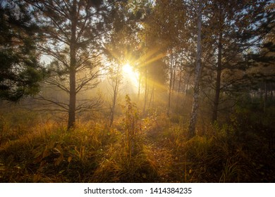 Beautiful morning in the autumn forest. Bright sun light rays through the trees and morning fog.
