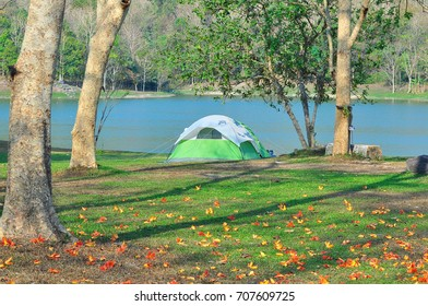 Beautiful morning in camp ground. Tent is on the side of the river  . The flowers are falling on the ground