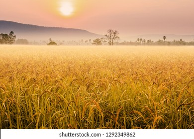 Beautiful morning fog in the fields rice background, Thailand.