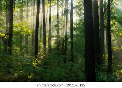 Hermosa mañana en el bosque