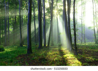 Beautiful morning in the forest