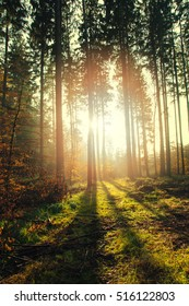 Beautiful morning in forest. Autumn landscape