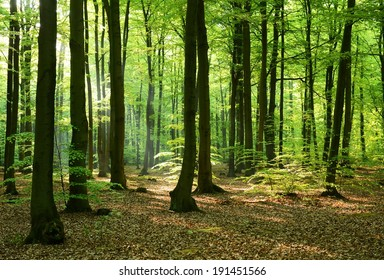 Beautiful morning in the forest - Poland