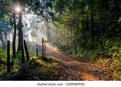 Beautiful morning in a forest in Western Ghats in Karnataka India