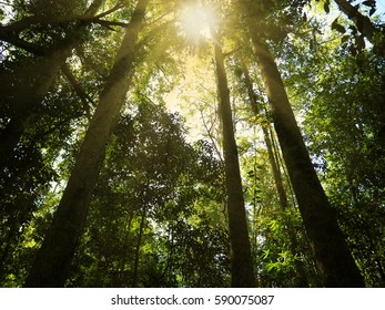 Beautiful morning in the green forest with rays of sun in summer.