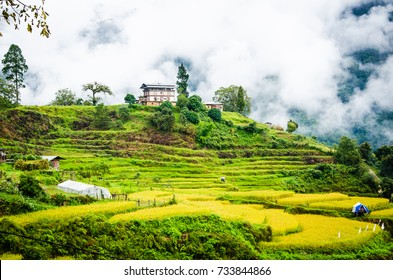 A beautiful morning of green rice fields on the top of mountain with the nicely fresh air in Punakha city, Bhutan after a few hours drive from Thimpu capital city.