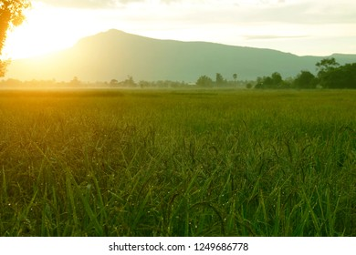 Beautiful morning landscape with the rice field