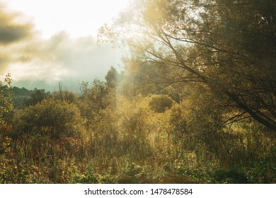 Beautiful morning landscape with sunlight, haze, trees and brush