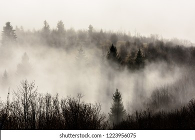 Beautiful morning landscape with trees in the fog. Foggy Landscape in Mountains.