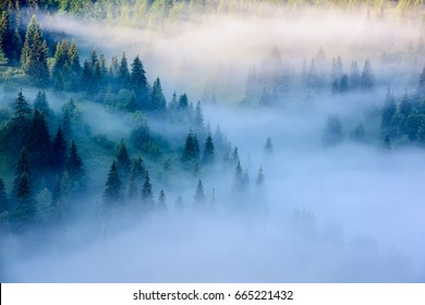 Beautiful morning landscape with trees in the fog. Foggy Landscape.