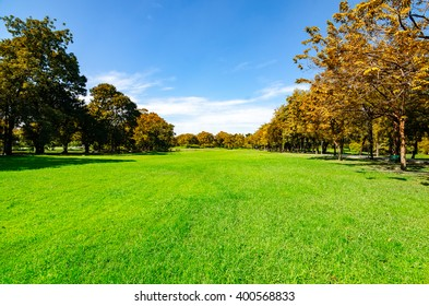 beautiful morning light in public park with green grass field and green fresh tree plant perspective to copy space for multipurpose