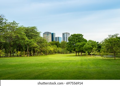 Beautiful morning light in public park with green grass field and green fresh tree plant at Vachirabenjatas Park Bangkok, Thailand