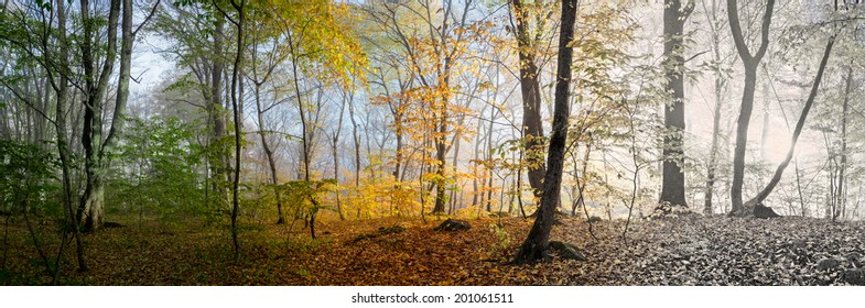 Beautiful morning scene in the forest, wood panorama changing seasons, spring, summer, autumn, winter Is Coming