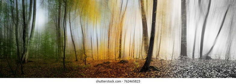 Beautiful morning scene in the forest, wood panorama changing seasons