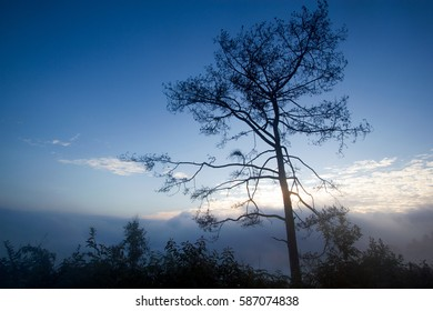 Beautiful morning shot with sea of mist and tree in foreground