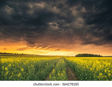 Beautiful morning sky above field with yellow flowers