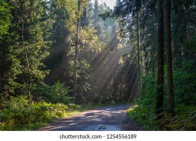 beautiful morning sun light shining through the trees on the road, sun rays in distance