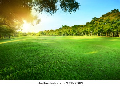 beautiful morning sun light shining  in public park with  grass field and green fresh tree bush use as copy space and natural background,backdrop