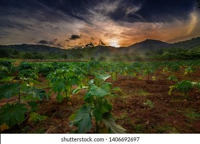 Beautiful morning sunrise with green plants Coimbatore Tamilnadu