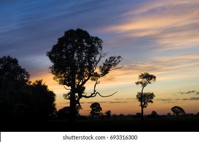 Beautiful morning sunrise Shade trees at sunrise