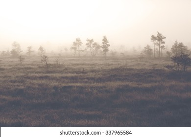 A beautiful morning at the swamp. Image taken on a cold morning in Finland. Image has a vintage effect applied.