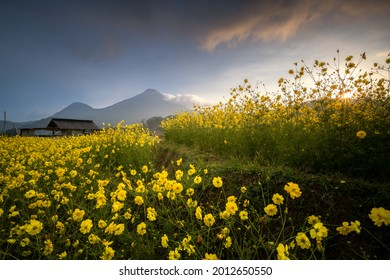Beautiful morning view of flower garden in the Brenjong, Trawas, Mojokerto, East Java, Indonesia. Noise and grainy images - Shutterstock ID 2012650550