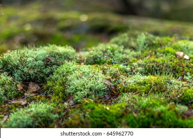 Beautiful moss and lichen covered stone. Bright green moss background. Saturated green abstract pattern. Shallow focus. Filled full frame picture. Moss with autumn wilted brown leaves. Side view.