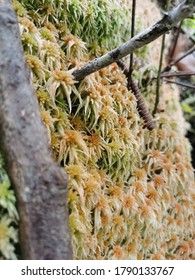 Beautiful moss from the mountains