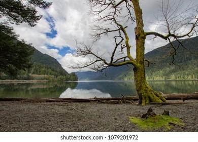 Beautiful mossy tree scenery