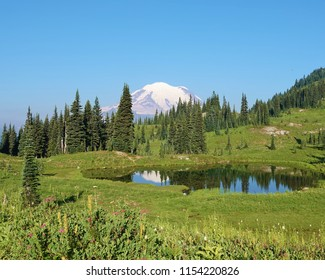 Beautiful Mount Rainier National Park summer scene. Wildflowers in green grass foreground. Tranquil alpine lake reflects the tip of snow covered Mount Rainier & line of evergreen trees in background.