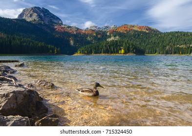 Beautiful mountain Black lake view in Durmitor National Park, Zabljak, Montenegro