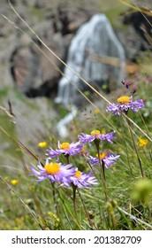 Beautiful mountain flowers in sunlight