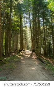 A beautiful mountain forest on Harder Kulm, Switzerland