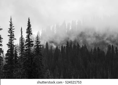 beautiful mountain forests covering with a lot of fog.