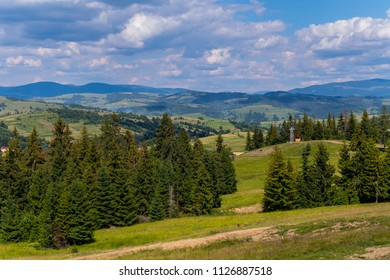 Beautiful mountain green slopes with growing tall firs stretching away to the horizon line with gray clouds in the sky.