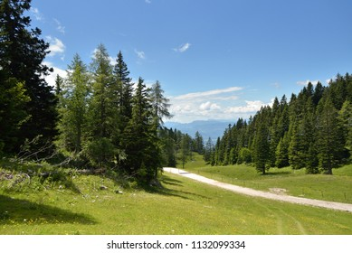 beautiful mountain landscape, pine trees and green summer meadow with blue sky, slovenian alps, Krvavec Slovenia