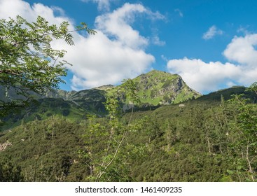 Beautiful mountain landscape with rowen and spruce trees, dwarf scrub pine and sharp green grassy mountain peak. Western Tatras mountains, Rohace Slovakia, summer sunny day, blue sky white clouds