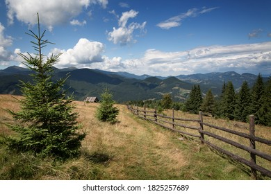 Beautiful mountain landscape with spruce in the foreground