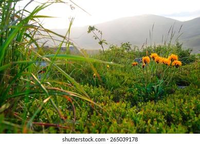 Beautiful mountain landscape in sunlight, Carpathian mountains