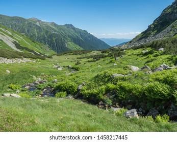 Beautiful mountain landscape with water stream creek, lush grass, spruce trees, dwarf scrub pine and mountain peaks. Ziarska dolina, Western Tatras mountains, Rohace Slovakia, summer, blue sky