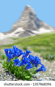 Beautiful mountain Matterhorn with blooming gentian, Pennine Alps, Switzerland.