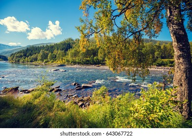 Beautiful mountain river shore with tree.  Wild nature Norway.