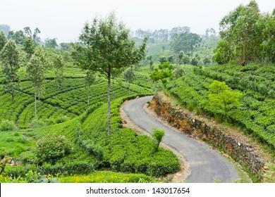 Beautiful Mountain Road through tea estates in Sri Lanka